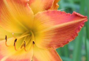orange-seedling-img_9237-macro